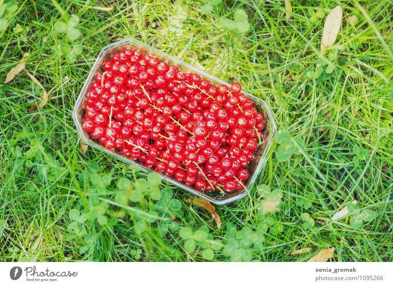 Johannisbeeren Natur Ferien & Urlaub & Reisen Erholung rot Umwelt Leben Gras Lifestyle Lebensmittel Frucht Freizeit & Hobby Tourismus Idylle Ernährung genießen