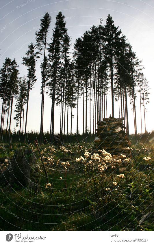 Herbst Baum Wald Wiese Fichte Thüringen Wäldchen
