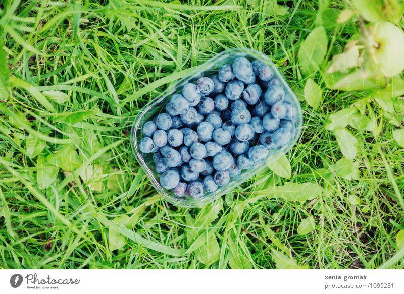 Blaubeeren Ferien & Urlaub & Reisen blau Erholung Gesunde Ernährung Leben Gras Gesundheit Freiheit Lebensmittel Lifestyle Frucht Freizeit & Hobby Tourismus