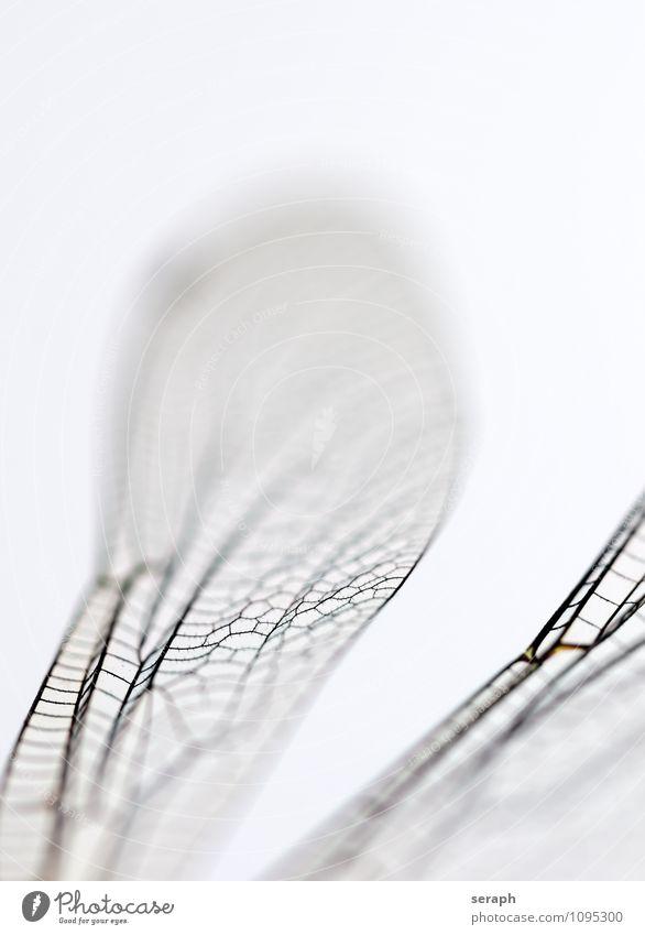 Ikarus Insekt Wanze fliegen Natur wild Libelle Tier Flügel Lebewesen Nahaufnahme Makroaufnahme zerbrechlich durchsichtig Chitin Umwelt fauna natürlich