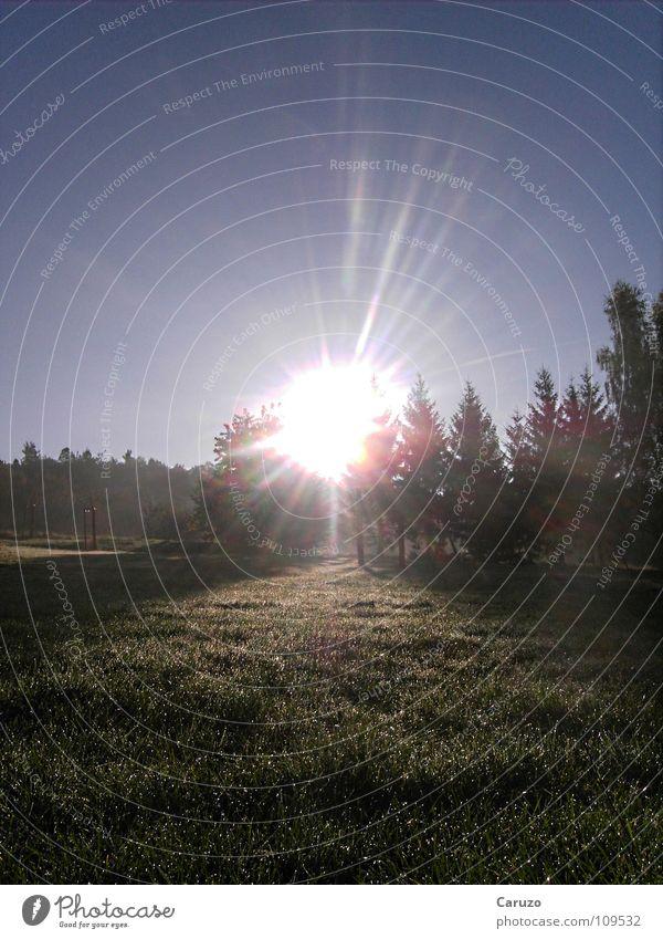 Morgensonne Sonne Licht aufstehen blenden Strahlung Sonnenstrahlen Gras Wald Baum hell Himmelskörper & Weltall Langeweile Sun Siegwinden Seil