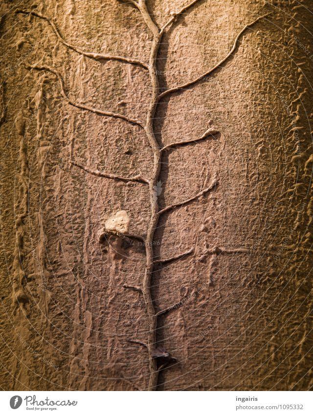 Baumbewuchs Natur Pflanze Efeu Blatt Kletterpflanzen Blattadern dehydrieren Wachstum natürlich trocken braun grau grün Stimmung trösten geduldig authentisch