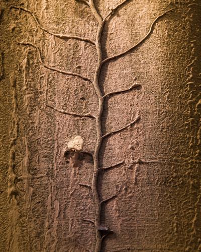 Baumbewuchs Natur Pflanze grün Blatt natürlich grau braun Stimmung Wachstum ästhetisch authentisch Herz Vergänglichkeit Glaube trocken