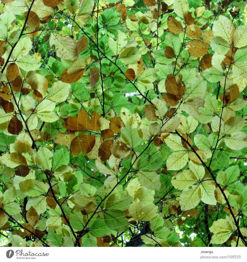 Undurchschaubar Blatt grün hellgrün Wald geschlossen Wachstum saftig Kraft Baum Photosynthese Pflanze Botanik Herbst Unterholz Holzmehl Natur Vergänglichkeit