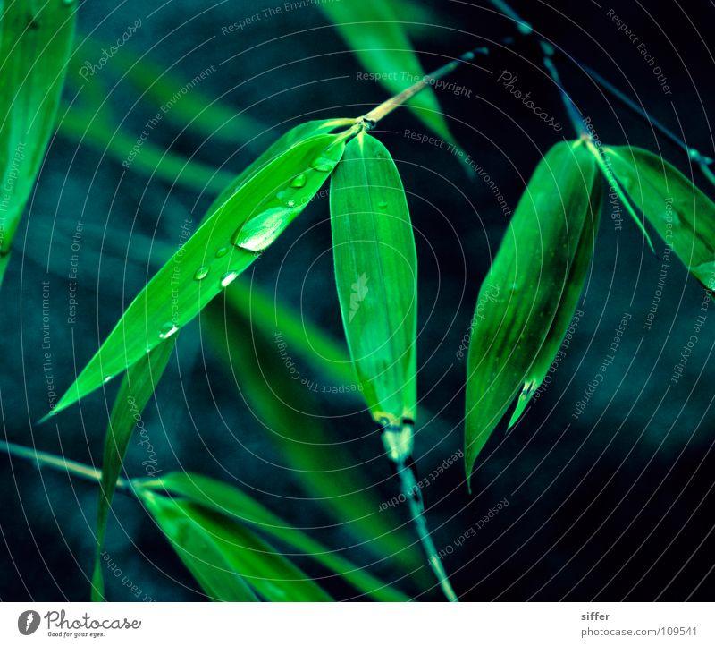 bangboo blau Wasser grün schön schwarz dunkel Gras Holz Sand Erde dreckig Wassertropfen Seil Tropfen Ast Asien