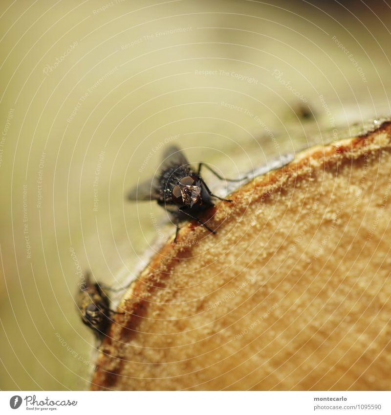 facetten Umwelt Natur Baum Baumrinde Tier Wildtier Fliege Tiergesicht Flügel Auge 2 Holz Aggression authentisch Ekel hässlich klein nah natürlich weich braun