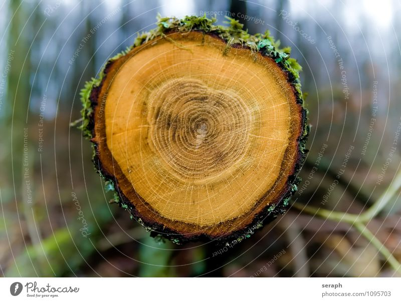 Jahresringe Natur alt Baum Wald Leben Holz Zeit Kreis historisch Ring Moos ökologisch Baumrinde Oberfläche flach antik