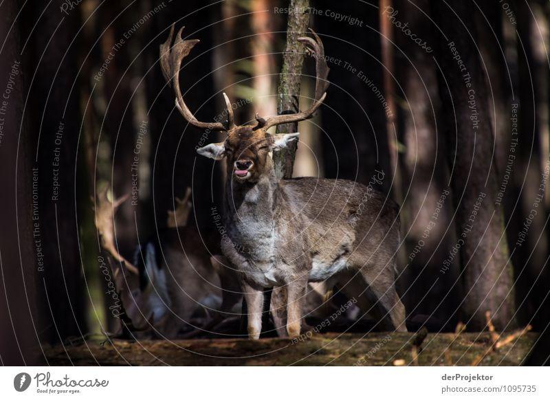 Der streckt mir doch einfach die Zunge raus *800* Natur Ferien & Urlaub & Reisen Pflanze Landschaft Tier Ferne Wald Umwelt Frühling Freiheit Tourismus Kraft