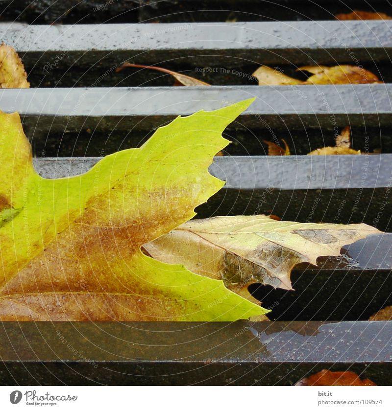 FRISCH GERÖSTET Blatt Ahorn kalt braun Herbst Januar Februar Dezember November Ferne Fahrweg schmelzen gelb Winter nußbraun Stengel Eischnee Blütenstiel