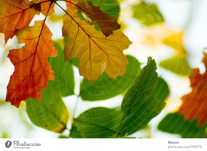 kommen und gehen Natur grün Baum rot Pflanze Farbe gelb Herbst Garten Park Deutschland Fröhlichkeit einzigartig rein Lebewesen Jahreszeiten