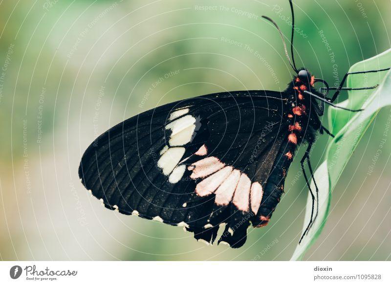 Red Dot Design Award Winner Natur schön Tier natürlich klein sitzen Flügel Insekt Schmetterling Leichtigkeit exotisch Urwald kuschlig Fühler Facettenauge