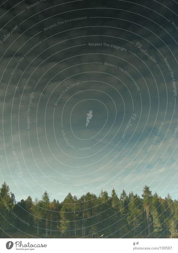 heaven and earth Baum Wald Wolken Reflexion & Spiegelung Wasserspiegelung grün Herbst Himmel blau
