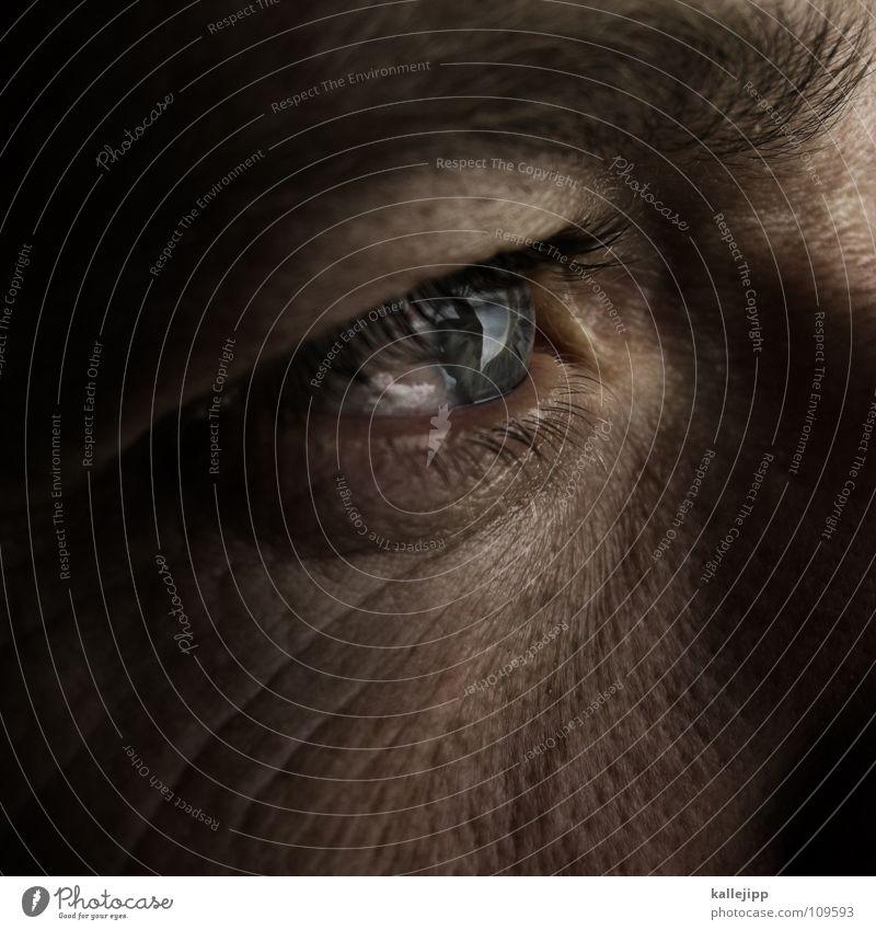 world in my eyes II Pupille Wimpern Augenbraue Organ Sinnesorgane Sommersprossen Pore Optiker Mann Lebewesen ich Haut Haare & Frisuren skin Blick Falte blau