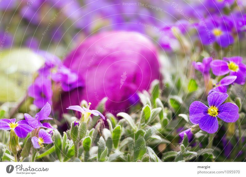 Ostergruß, ein Osterei im Blumenbeet Lebensmittel Ernährung Bioprodukte Ostern Natur Pflanze Frühling Blatt Blüte Grünpflanze Garten Blühend Freude Romantik Ei