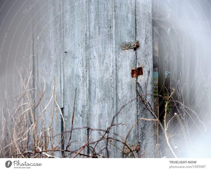 *100* ...ich bin dann mal weg... Freude Freizeit & Hobby Häusliches Leben Garten Gartenhaus Natur Frühling Sträucher Wildpflanze Menschenleer Hütte Fassade Tür