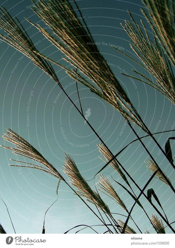 ::WUSCHELBÜSCHEL: Himmel Natur grün Pflanze Sommer Wiese Herbst Gras grau Linie Wind Rücken Sträucher einfach Getreide Stranddüne