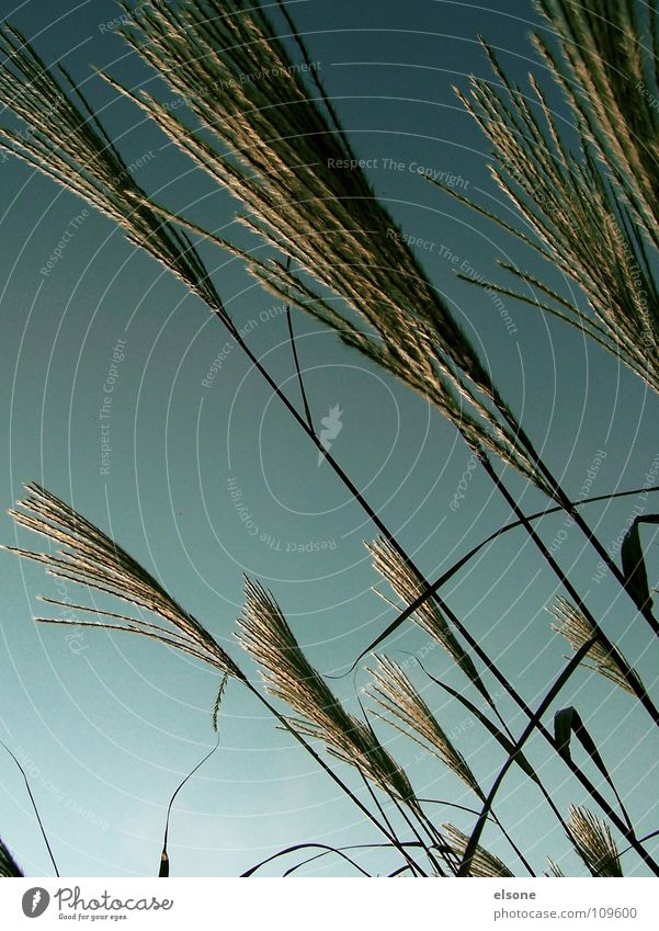 ::WUSCHELBÜSCHEL: Wiese Gras Halm Sträucher Pflanze grün Herbst grau Linie quer diagonal sehr wenige einfach Weide Natur Amerika Wind Stranddüne Schönes Wetter