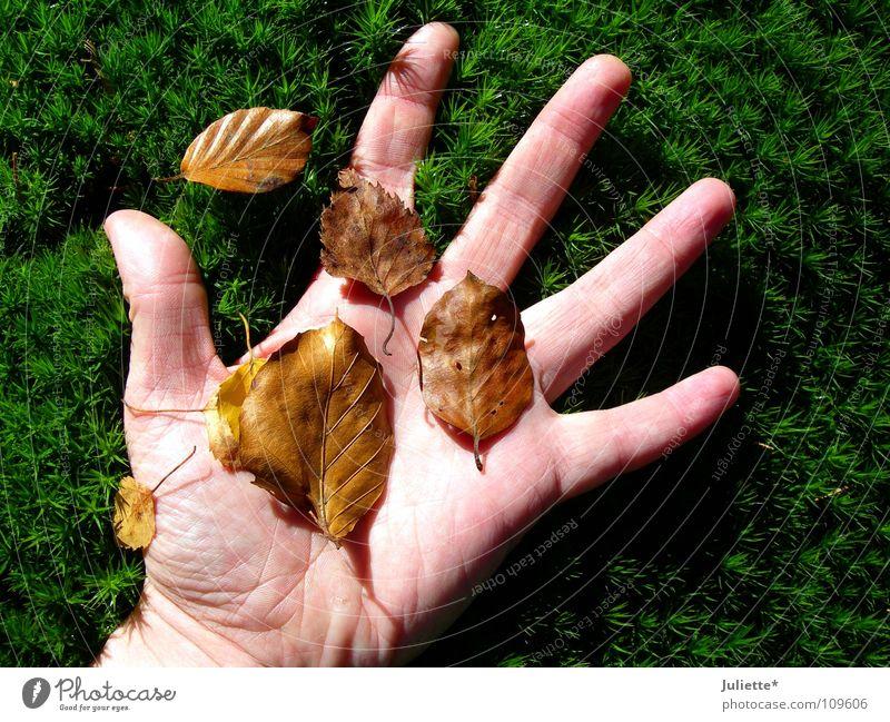Herbstfeeling Hand Gras Blatt berühren Gefühle grün braun runtergefallen Vergänglichkeit fünf Finger