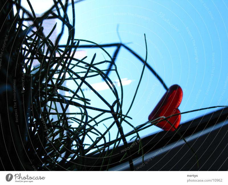 Blick aus dem Blumentopf Gras Aluminium grün rot Stil Fototechnik Herz blau Himmel