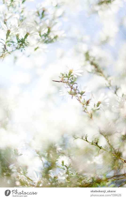 autumn snow Licht flower October white atmosphere morning light