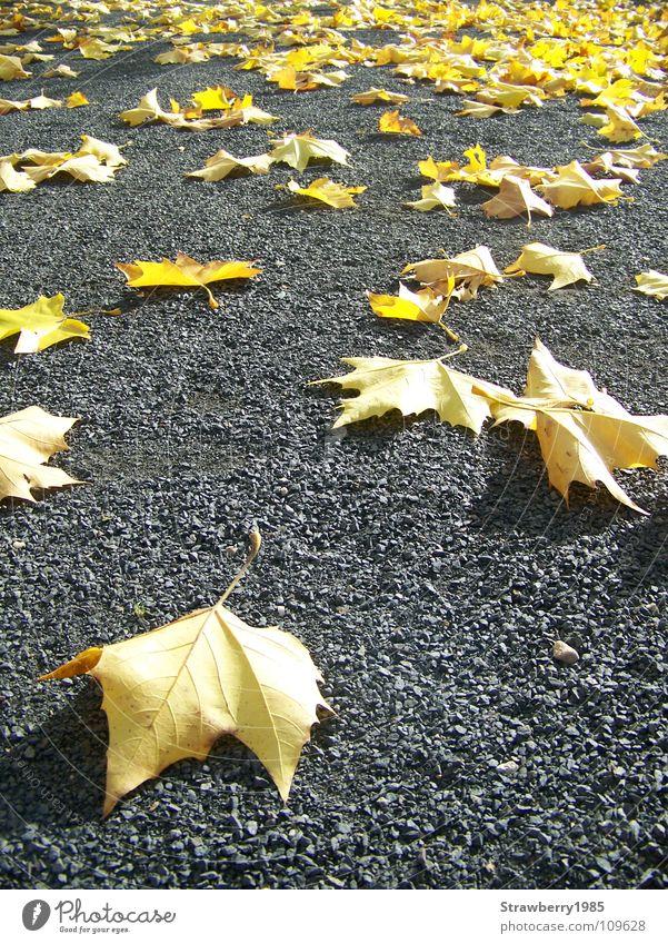 Die Gefallenen Farbe Baum ruhig Blatt gelb Wärme Gefühle Herbst grau Garten liegen Stimmung Deutschland orange gold Wind