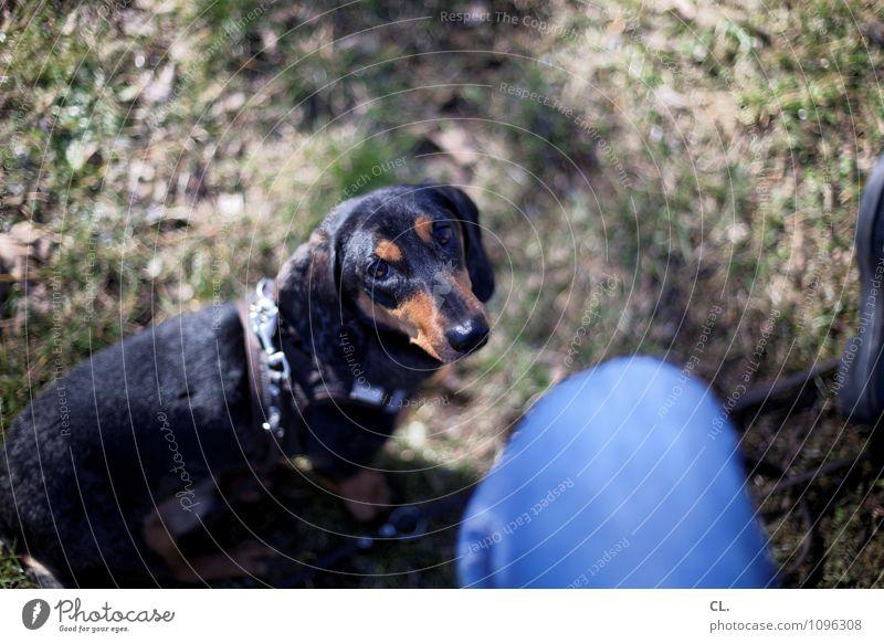 c+C Hund Mensch Tier Wiese Gras Glück Freundschaft Freizeit & Hobby Zufriedenheit sitzen warten Lebensfreude beobachten niedlich Schönes Wetter Pause