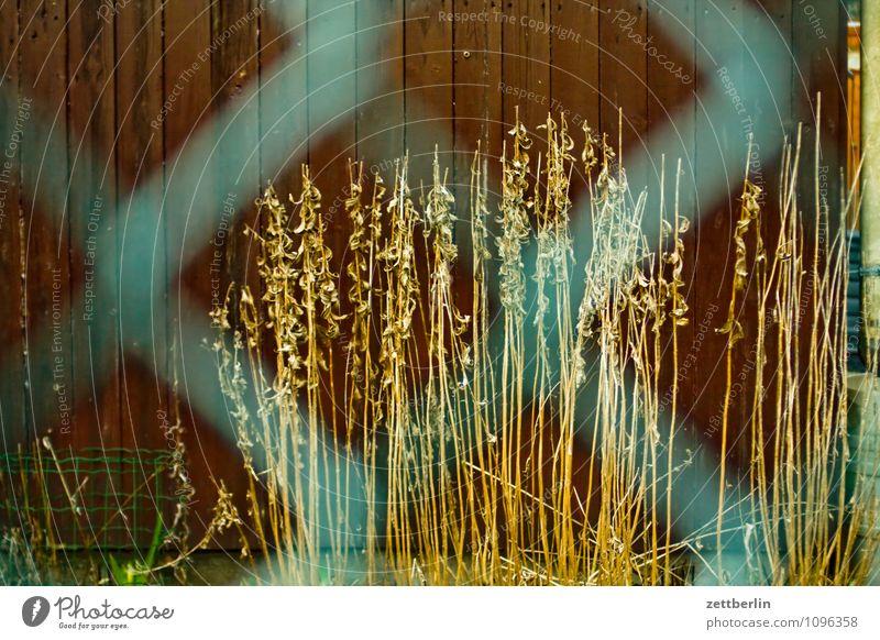 Garten Frühling Schrebergarten Zaun Maschendrahtzaun Nachbar Sträucher Stauden welk Herbst Gartenhaus Holzwand Wand Holzbrett nebeneinander Blatt Neugier