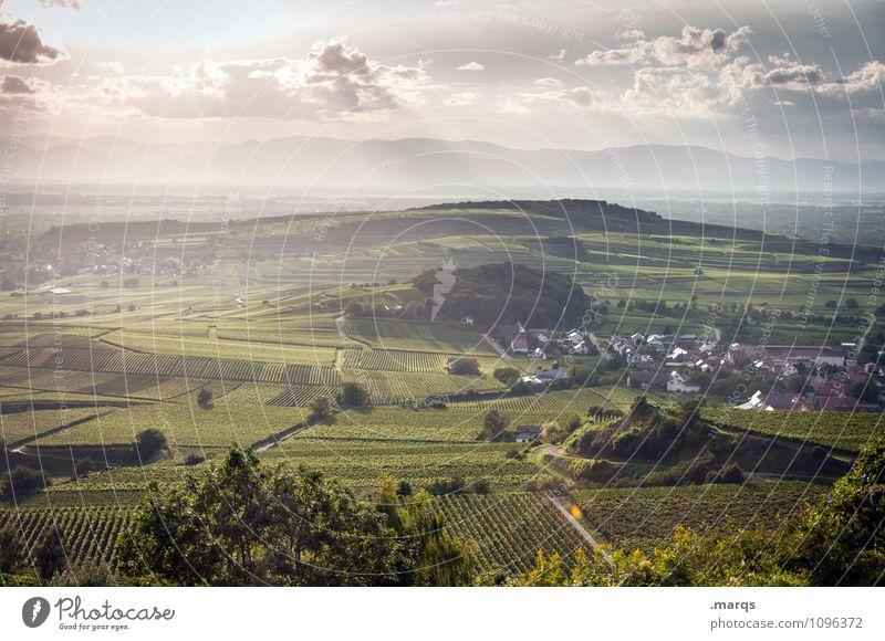 Jahrgang 2015 Ausflug Landwirtschaft Forstwirtschaft Natur Landschaft Pflanze Himmel Wolken Horizont Sommer Herbst Schönes Wetter Weinberg Weinbau Wiese Hügel