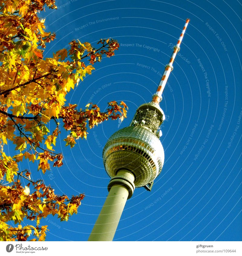 herbstliche höhendominante Himmel blau Baum Blatt Herbst Berlin Kunst Tourismus Turm Fernsehen Schönes Wetter Denkmal Wahrzeichen Radio Berlin-Mitte