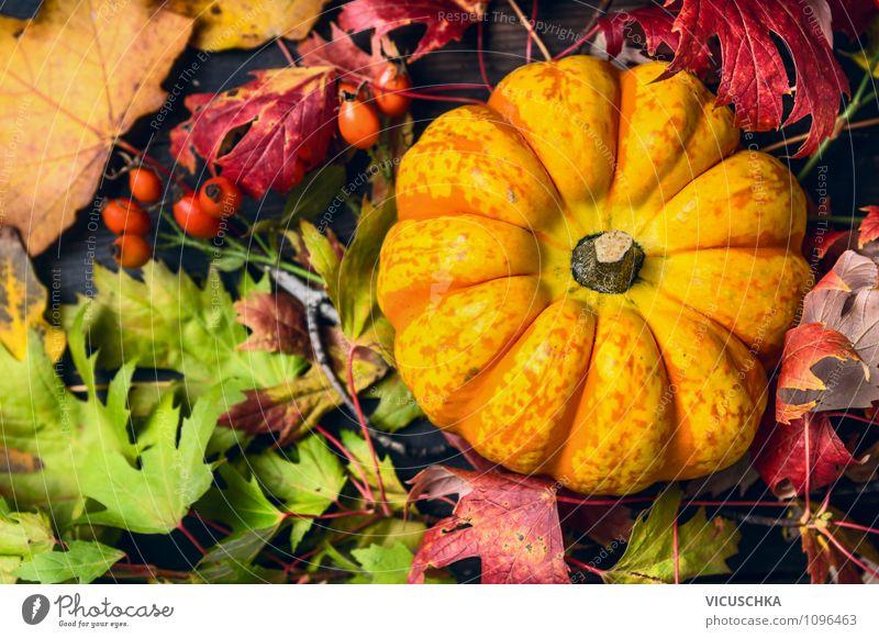 Kürbis mit buntem Herbstlaub Natur Blatt gelb Leben Stil Hintergrundbild Feste & Feiern Garten Lebensmittel Lifestyle Design Dekoration & Verzierung Rose Gemüse
