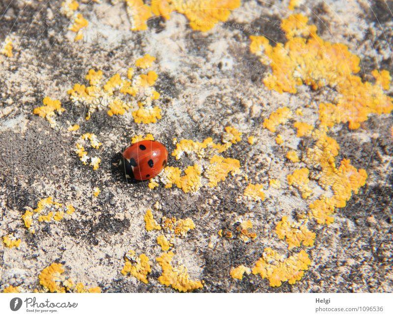 Sonnenanbeter auf der Mauer Natur Einsamkeit rot Tier schwarz gelb Wand Leben Frühling natürlich Glück grau klein außergewöhnlich authentisch