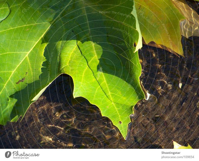 getragen Natur Wasser grün Blatt Farbe Herbst orange Fluss schimmern Geplätscher schillernd