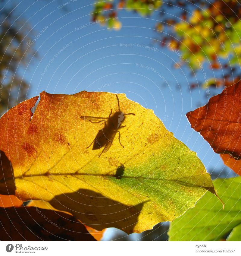 was suchst du da? Herbst mehrfarbig Blatt grün gelb braun rot Herbstfärbung Baum Wespen Insekt Suche wach Fühler Blattadern Ordnung Quadrat Licht nah Tier