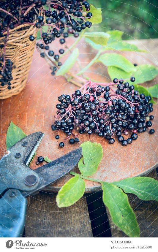 Holunderbeeren und alte Gartenschere Lebensmittel Frucht Ernährung Bioprodukte Vegetarische Ernährung Diät Lifestyle Stil Design Gesunde Ernährung Sommer Tisch