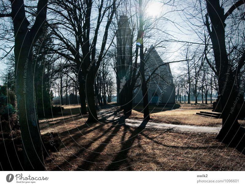 Stadtkirche Umwelt Natur Wolkenloser Himmel Winter Schönes Wetter Pflanze Baum Zweige u. Äste karg kahl Park Wiese Falkenberg Brandenburg Deutschland Kleinstadt