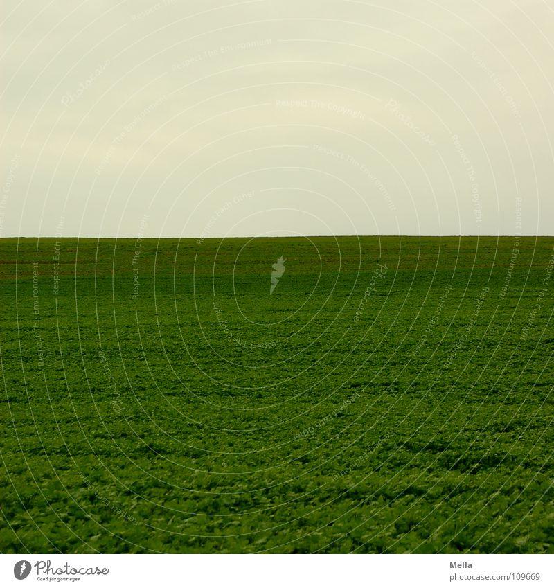 Ein weites Feld grün Wiese grau schlechtes Wetter Wolken Ferne leer Luft Himmel frei Freiheit zwei Drittel ein Drittel