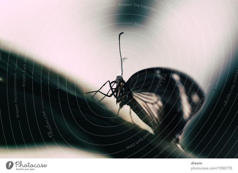 Through Darkness Comes Light Umwelt Pflanze Blatt Urwald Tier Wildtier Schmetterling Flügel Fühler Insekt 1 exotisch klein Natur Farbfoto Menschenleer