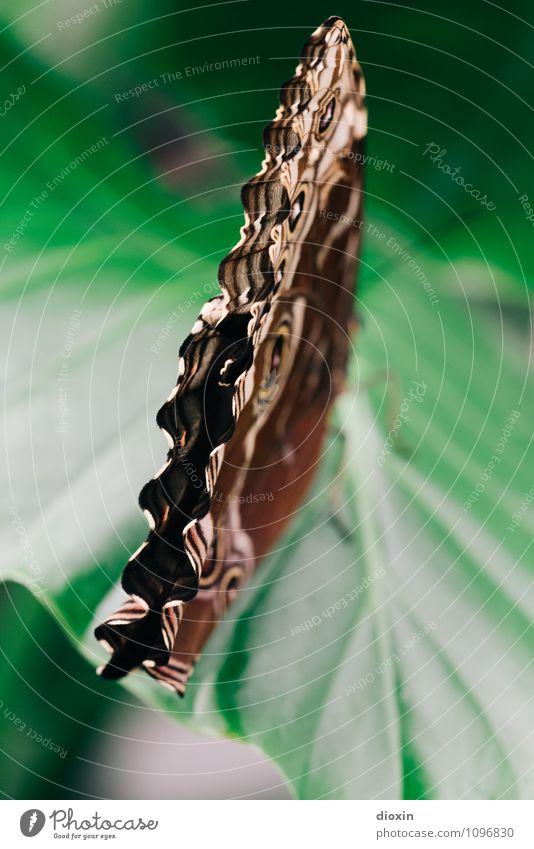 waves Umwelt Natur Tier Pflanze Blatt Grünpflanze Wildtier Schmetterling Flügel 1 sitzen Wellenform Wellenlinie Leichtigkeit filigran leicht Farbfoto
