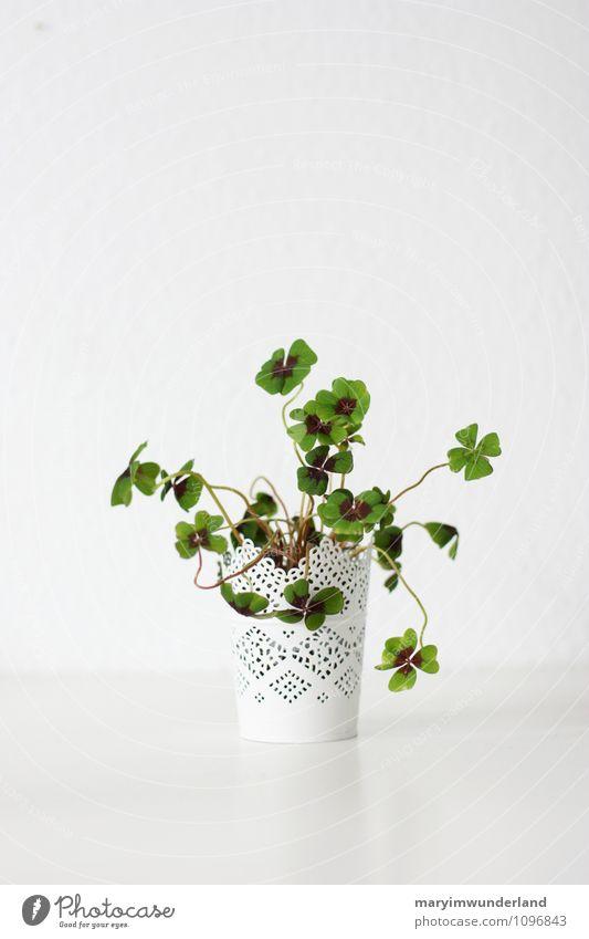 viel glück! Natur Pflanze Blatt Grünpflanze Topfpflanze Klee Kleeblatt vierblättrig grün Glück Leben chaotisch weiß Wachstum neu Silvester u. Neujahr