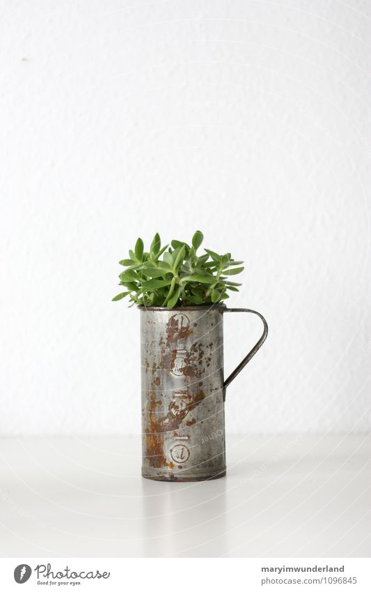 grünzeug I Natur alt Pflanze weiß Blatt Tier frisch Rost exotisch saftig Grünpflanze Kaktus Kannen Topfpflanze Freiraum