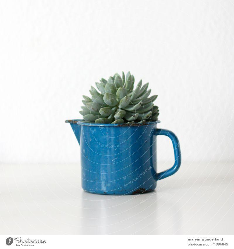 grünzeug II Natur blau Pflanze weiß Blatt Tier retro exotisch saftig Grünpflanze Kaktus Kannen Emaille Topfpflanze Flohmarkt