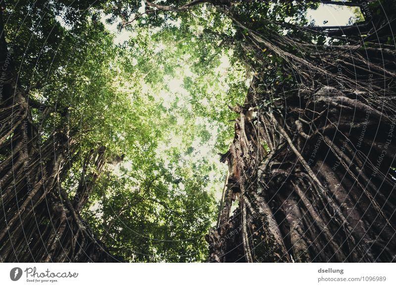 Regenwald, Perspektive von unten nach oben Starke Tiefenschärfe Sonnenstrahlen Sonnenlicht Kontrast Schatten Licht Morgen Menschenleer Außenaufnahme Farbfoto