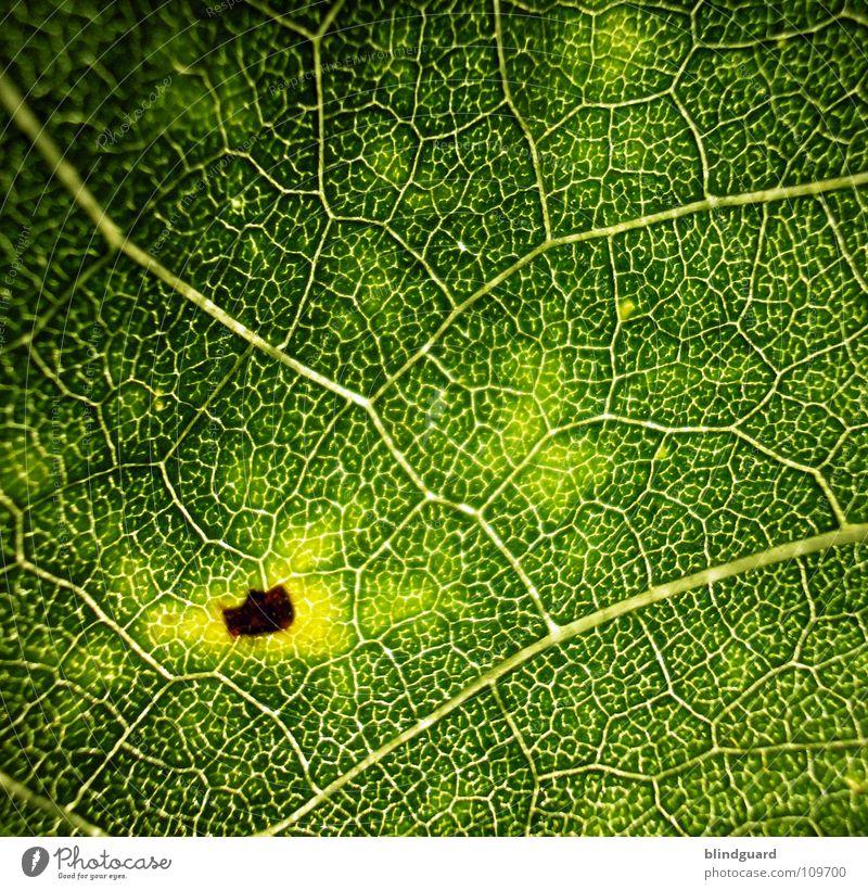 Beginning Of The End Blatt Physik fein Geäst Sonnenblume grün Pflanze Biologie frisch grasgrün saftig Gärtner Sommer Perspektive Ranke gedeihen Wachstum