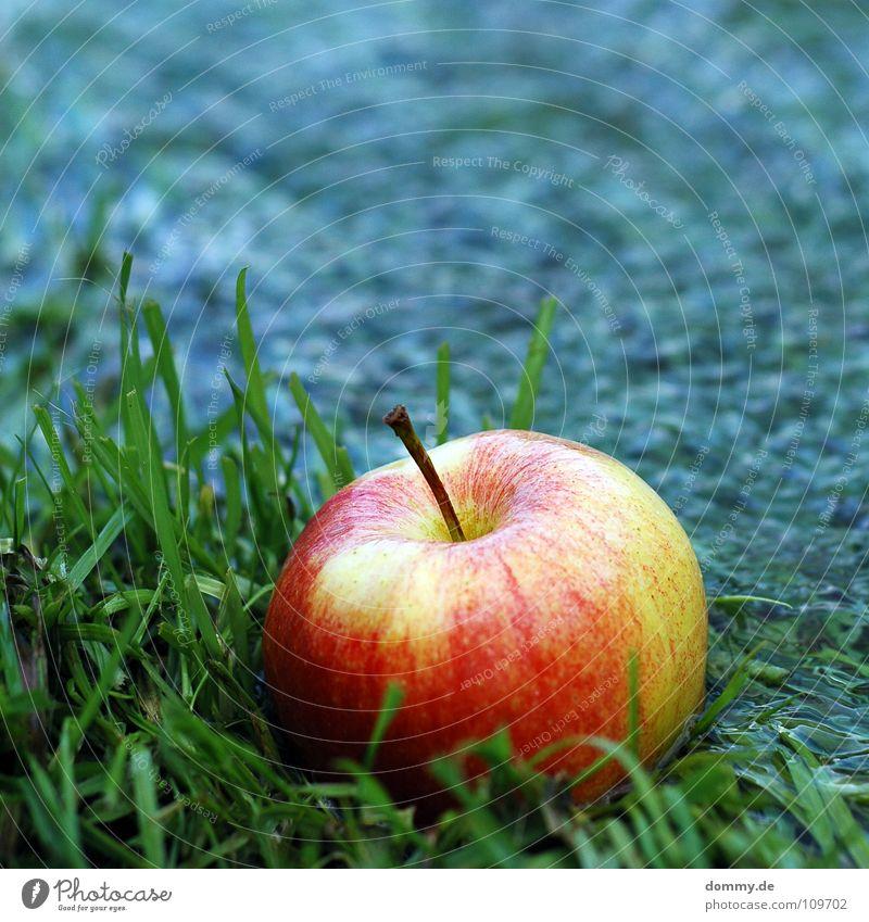 eat me Natur grün blau rot Ernährung Gras Küste Lebensmittel Frucht süß Fluss rund Apfel Wut Stengel Flüssigkeit