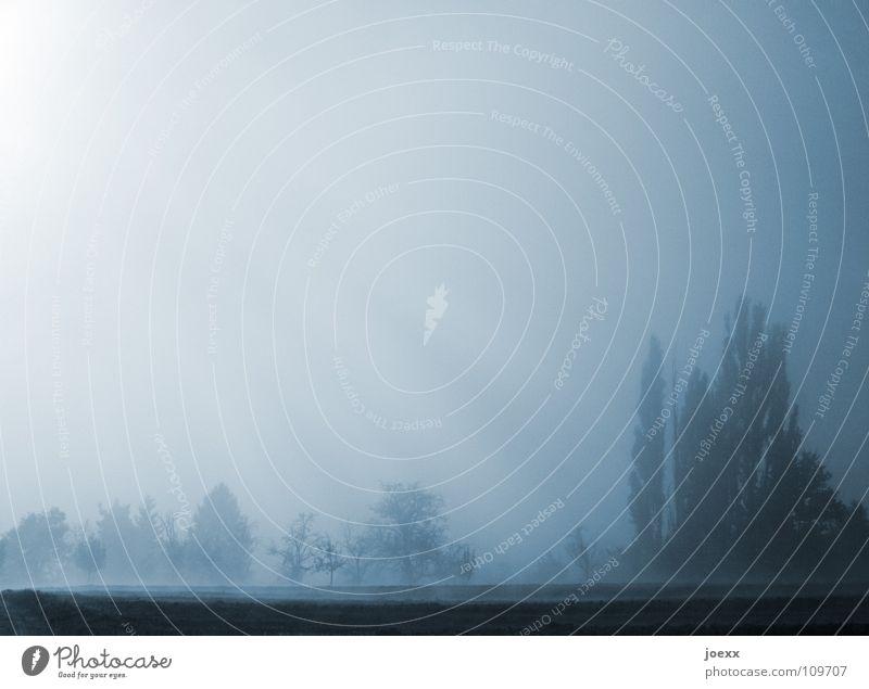 Sonnennebel Baum Baumreihe Bodennebel Erholung Morgen Tau Herbst Idylle Licht Nebel Nebelwand unklar poetisch Romantik ruhig Schleier Smog Sonnenlicht