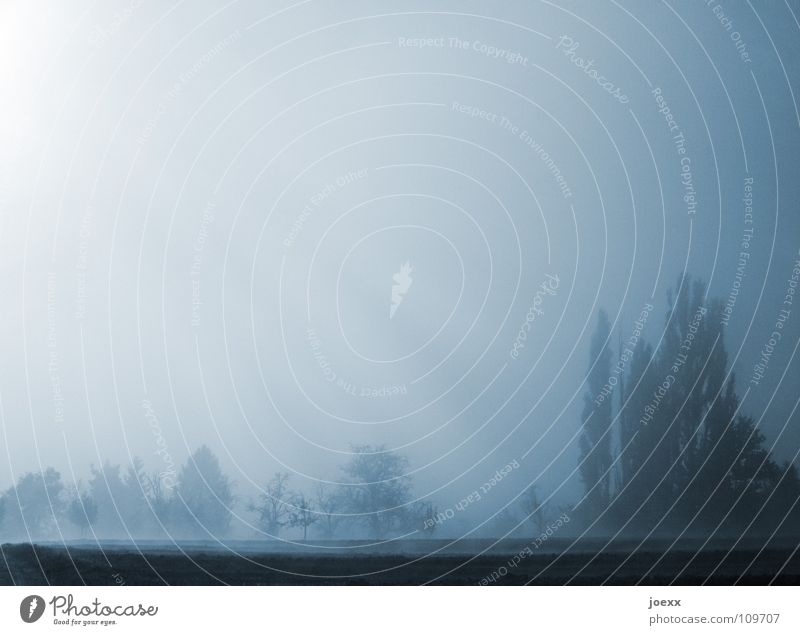 Sonnennebel Himmel Baum ruhig Erholung Herbst Traurigkeit Stimmung Nebel Ordnung Romantik Spaziergang Vergänglichkeit Idylle Tau unklar Schleier
