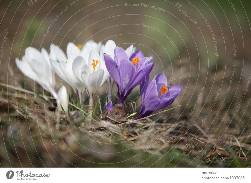Zusammenhalt Natur Pflanze schön grün weiß Erholung Blume Frühling Blüte Stil Garten Freundschaft orange Wachstum Zufriedenheit Erde