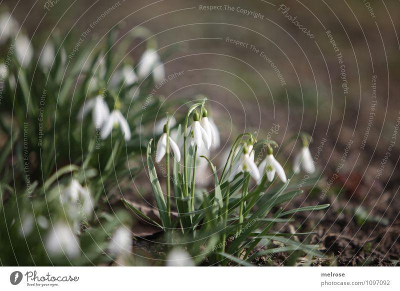 Vorfreude Natur Pflanze schön grün weiß Erholung Blume Blatt Gras Frühling Blüte Garten braun Wachstum leuchten Erde