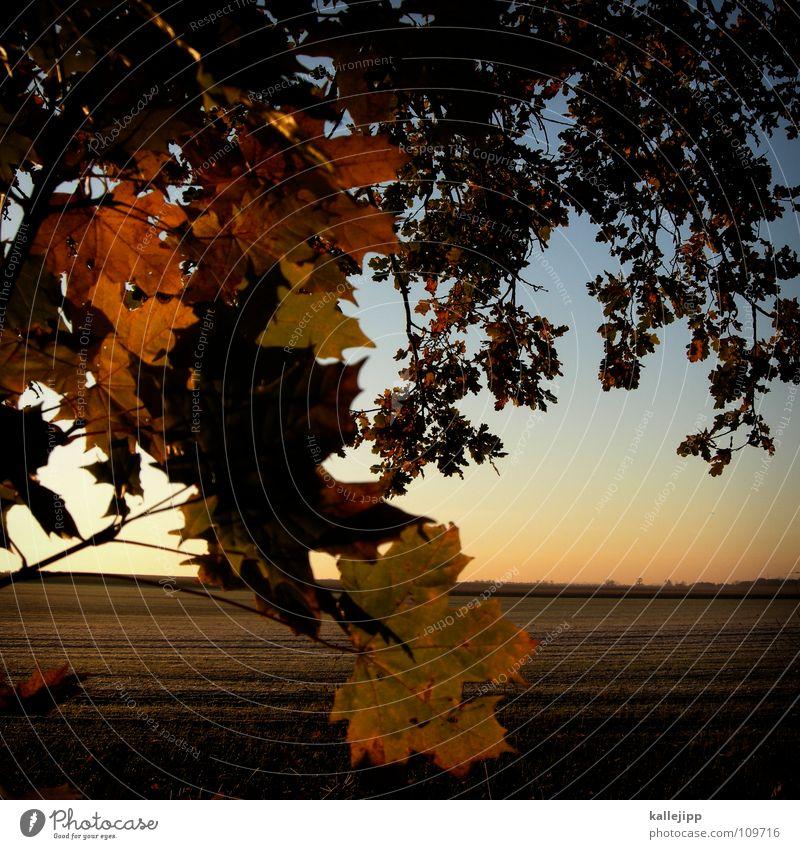 am waldrand Baum rot Pflanze Sonne Blatt Landschaft kalt Lebensmittel Herbst träumen Horizont braun Hintergrundbild Erde Feld Gold