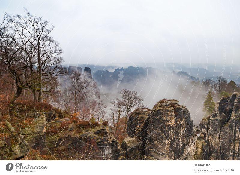 Nebelschwaden in der Sächsischen Schweiz Himmel Natur blau Pflanze Baum Landschaft ruhig Tier Berge u. Gebirge Herbst grau braun Stimmung Felsen Horizont Wetter
